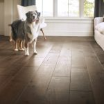 Dog on floor | Reinhold Flooring