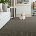 Puppy on Carpet | Reinhold Flooring