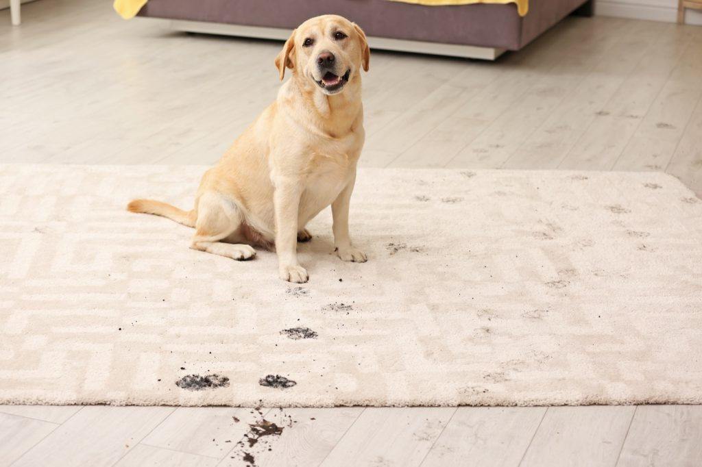 Rug care tips | Reinhold Flooring