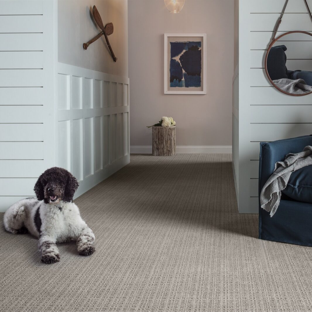 Dog on Carpet | Reinhold Flooring